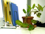 desk-and-plant-by-mconnors.JPG